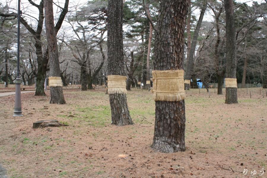 大宮公園02