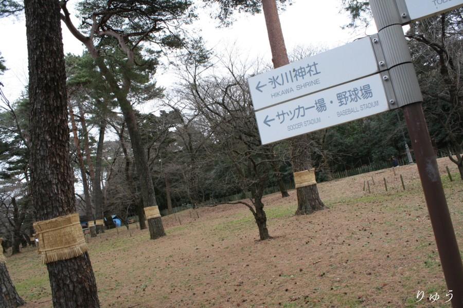 大宮公園01